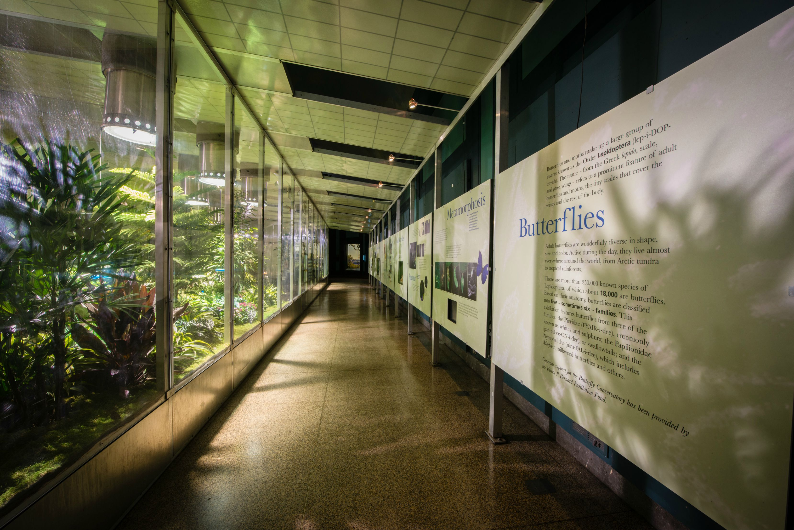 TROPICAL...corridor with vivarium on left. Photo: AMNH/D. Finnin